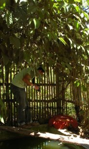Lokasi bunga Rafflesia, di pekarangan depan rumah uda Joni.