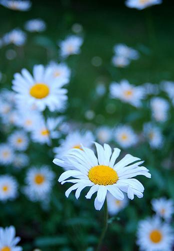 bunga.tiff
