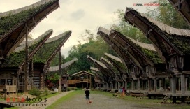 Traditional house namely Tongkonan of Toraja ethnic in Sout Sulawesi, Indonesia