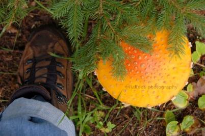 Gede banget kan, bandingkan dengan kaki saya yang yang dibungkus sepatu.