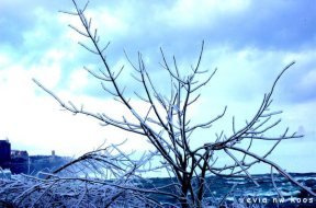 freezing tree